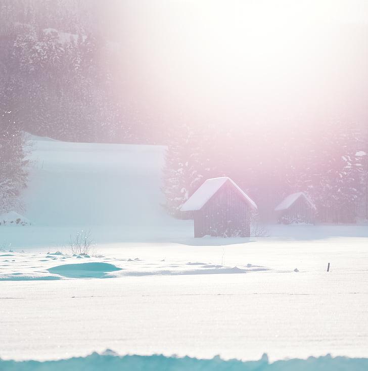 vinterdag, Pink humør, Sommerhuse, sne, bjælkehytte, vinter, natur