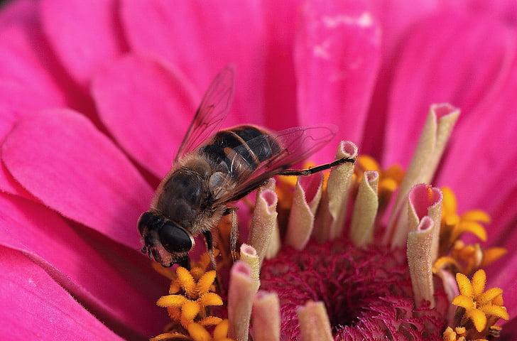 flor, flor, nèctar, abella, tancar, insecte, flor