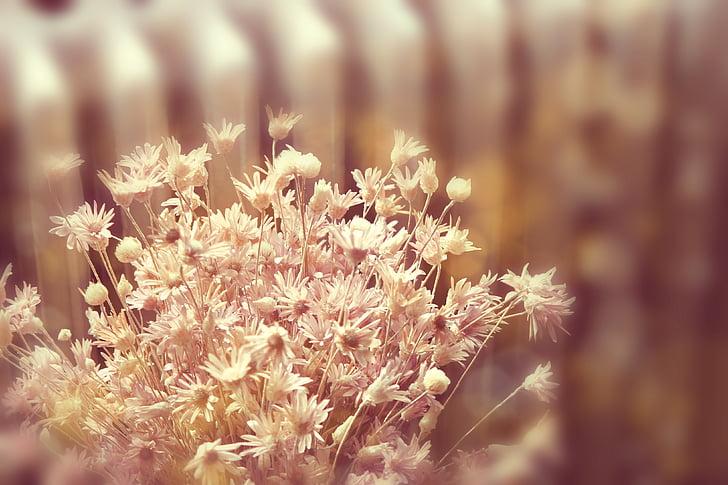 flor, flors, flor seca, pètal, flor rosa, estat d'ànim, fons