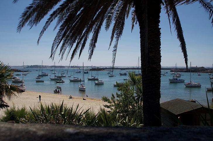 palm, seaside, sandy beach