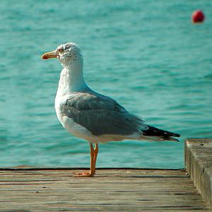 sea, seagull, bird, birds, jetty