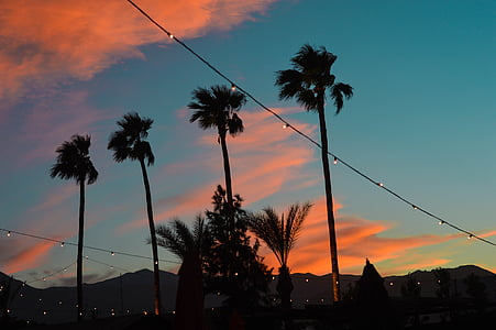 palmsprings, palmtrees, sunset, dusk, pinkclouds, silhouette