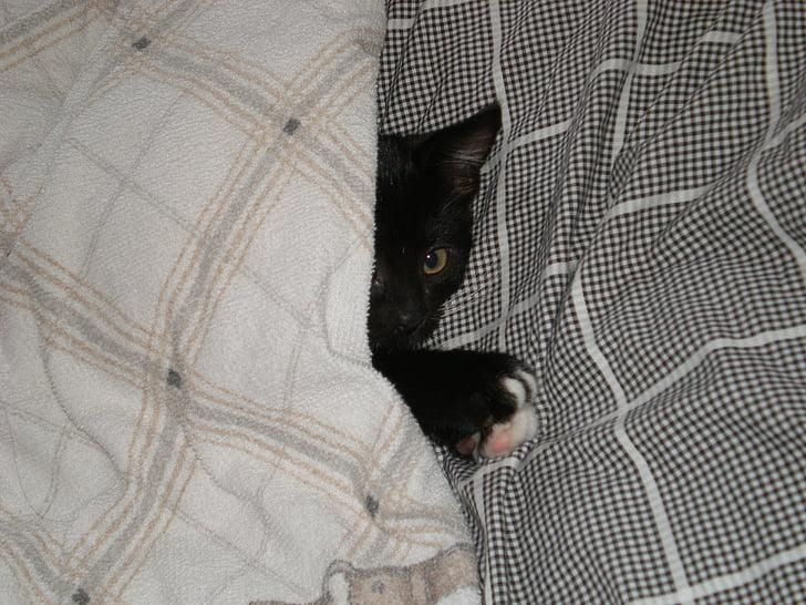 kucing bayi, selimut, kucing, anjing, hitam, meringkuk, Manis