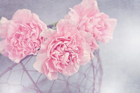 flors, claus d'espècia, Rosa, Clavell Rosa, pètals, cistella, cistella de malla