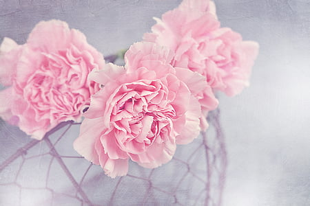 bloemen, teentjes, roze, anjer roze, bloemblaadjes, mand, Mesh mand