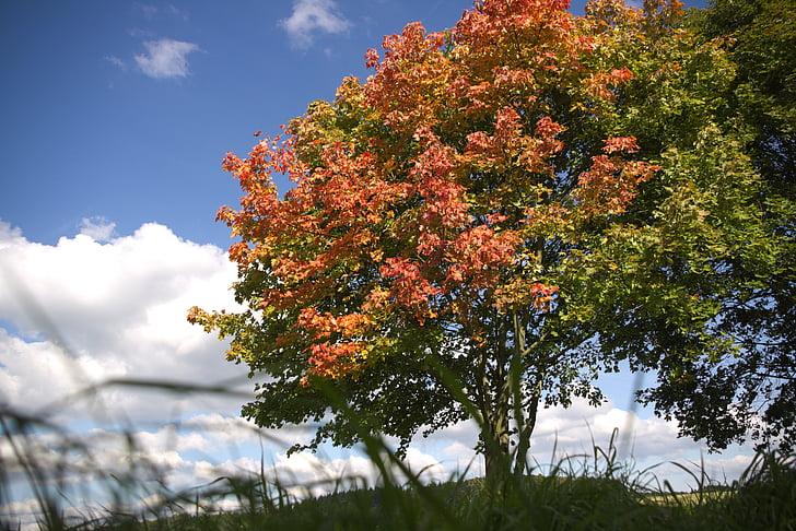 tardor, principi de la tardor, principi de tardor, arbre, cel, HDR, núvols