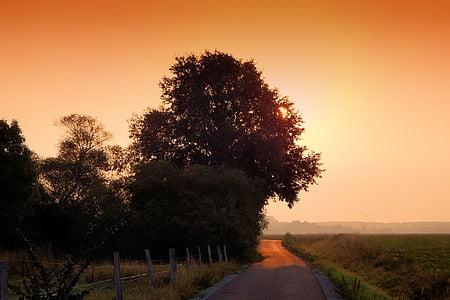 Alba, boira, boira, arbres, morgenstimmung, hores del matí, boira de matí