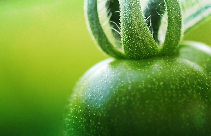 zaļi tomāti, tomāti, zaļa, nenobriedušu, putekšnīcas tomātu, par