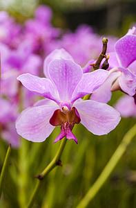 porpra, flor, orquídia, natura, Spa, natural, teràpia