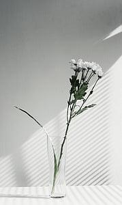flor, Gerro, exhibició, negre, blanc, blanc i negre, planta