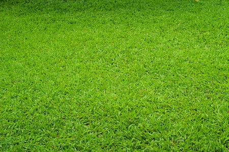 zelená, tráva, louky a pastviny, materiál, pozadí, Příroda, zelená barva