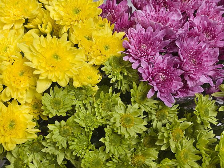 Hoa, sáng sủa, màu vàng, màu tím, Hoa cúc, màu sắc tươi sáng, Hoa vườn