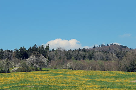đồng cỏ mùa xuân, rừng, Meadow, cỏ, Thiên nhiên, cảnh quan, bầu trời