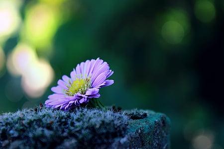 flor, solitari, sol, molsa, pedra, déco, decoració