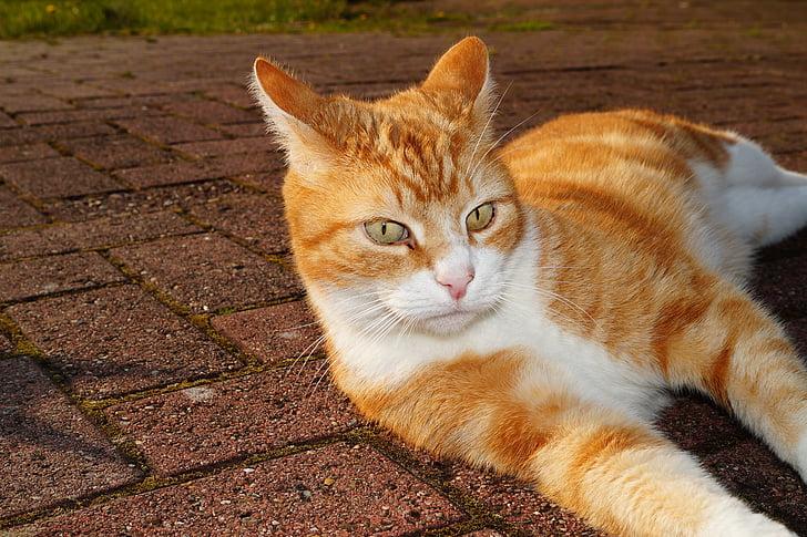 kat, relaxen, de ogen van de kat, genieten van de zon