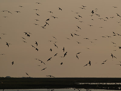 cel de nit, atmosfèrica, cel, eixam, volar, ocells, nit