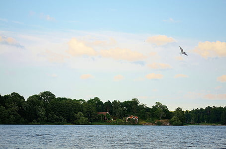 bird, seagull, animal, water bird, sea, coast, background