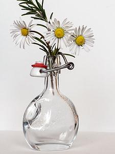 Margarida, ampolla, romaní, Gerro, flor, decoració, RAM