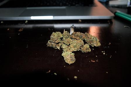 marijuana, drugged, macbook, smoke, drug