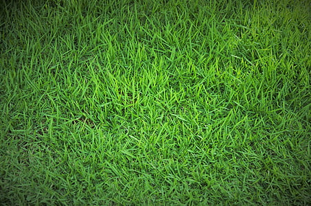χλόη, πράσινο γρασίδι, γκαζόν, πράσινο, Βραζιλία, Κήπος