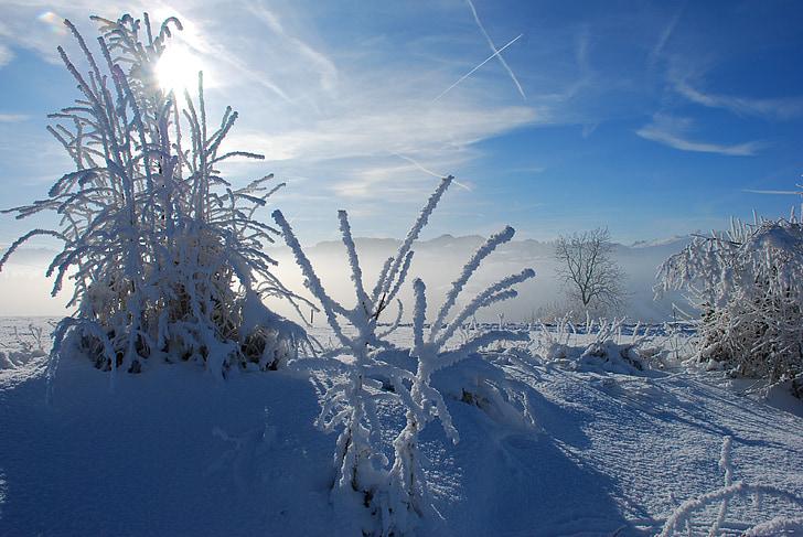 pozimi, zimsko razpoloženje, zimski, sneg, zasneženih, hladno