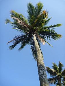 árbol de Palma, azul, cielo, hojas, Paraíso, tropical, Isla