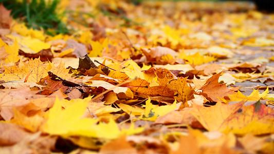 yaprak, Sonbahar, Sarı, sonbahar yaprakları, sonbahar yaprakları, yaprakları, Orman