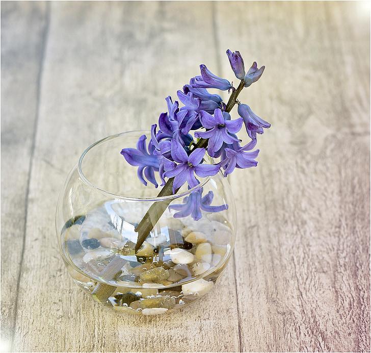 eceng gondok, bunga, bunga musim semi, vas, kaca dekoratif, batu, wangi bunga