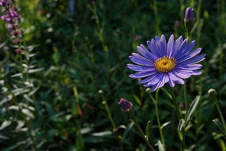 lilled, loodus, taimed, Vaata, Tabitha