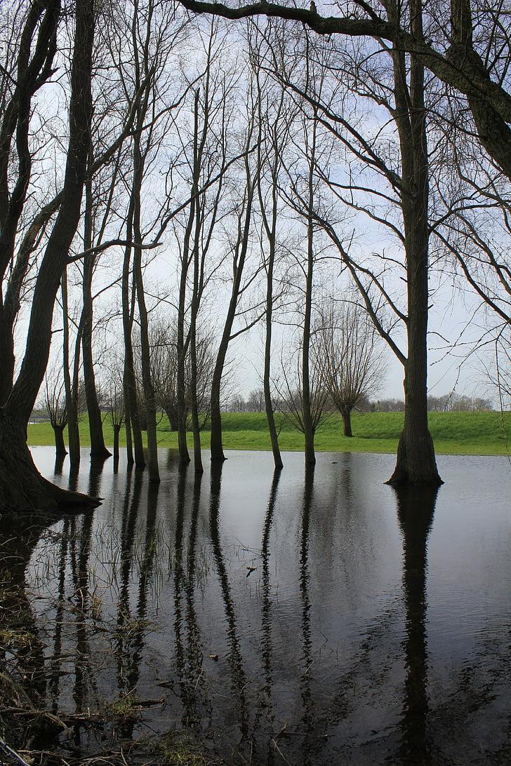 Silent water, puut, peili