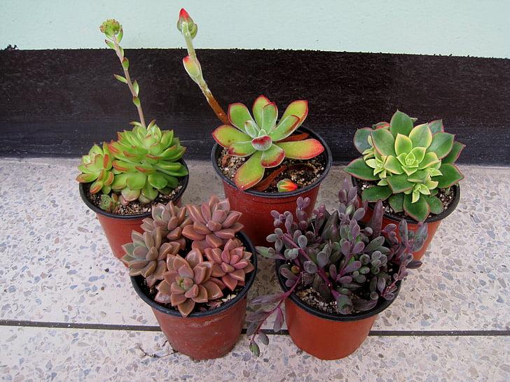Foto gratis: Indoor, pot tanaman, desktop, pot bunga, tanaman | Hippopx