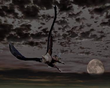 Adler, kalju kotka, Moon, taivas, pilvet, Raptor, petolintu