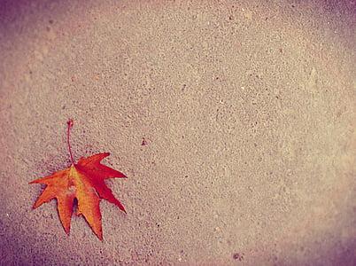 maple, leaf, maple leaf, ground, autumn, change, orange color