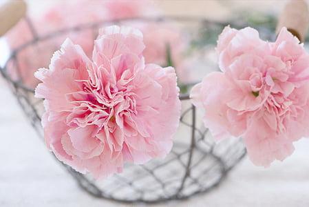 claus d'espècia, flors, flor, flor, Rosa, pètals, cistella