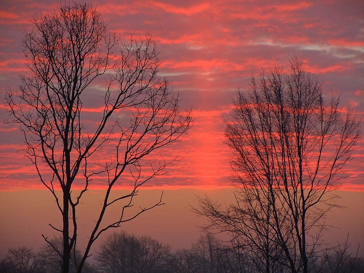 morgenrot, nubes, color rojo brillante, árboles, silueta