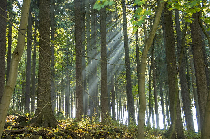 Erzgebirge, Scheibenberg, bosc, estat d'ànim tardor, Sunbeam, fullatge de tardor, temporades