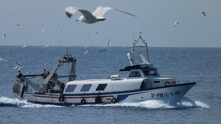 fishing boat, gulls, sea, birds, fish, catch