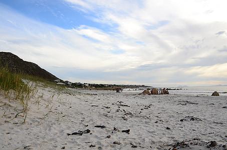 mestu Pringle bay, Cape town, Beach, morje, Ocean, morje plevela