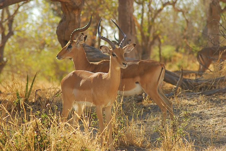 Àfrica, natura, fort, salvatge