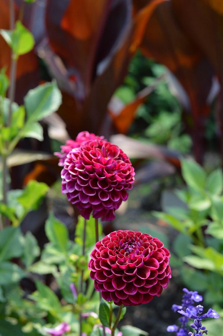 bloemen, Chicago, Botanische tuinen