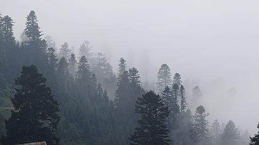 Gruzie, hory, mlha, Les, Příroda, strom, Zimní