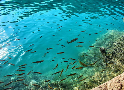 school of fish, fish, water, clear water, wildlife, marine, underwater