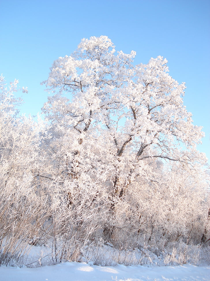 winter, snow, winter forest, trees in the snow