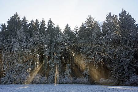 forest, trees, nature, landscape, sunlight, light beam, mood