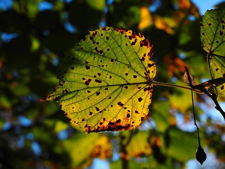 list, lišće, jesen, sunčano, šarene, boje jeseni, jesen lišće