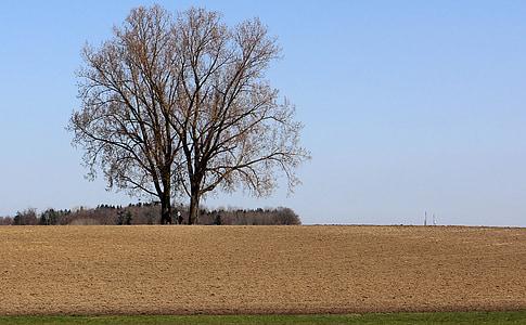 орни, поле, дърво, природата, небе