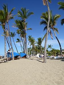 palmuja, Hawaii, Holiday, Beach, Sea
