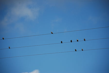 mirada, tardor, natura, cel, ramat d'ocells