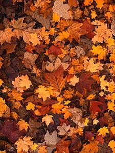 Spadek liści, jesień, pozostawia, Październik, lasu, brązowy, wiele