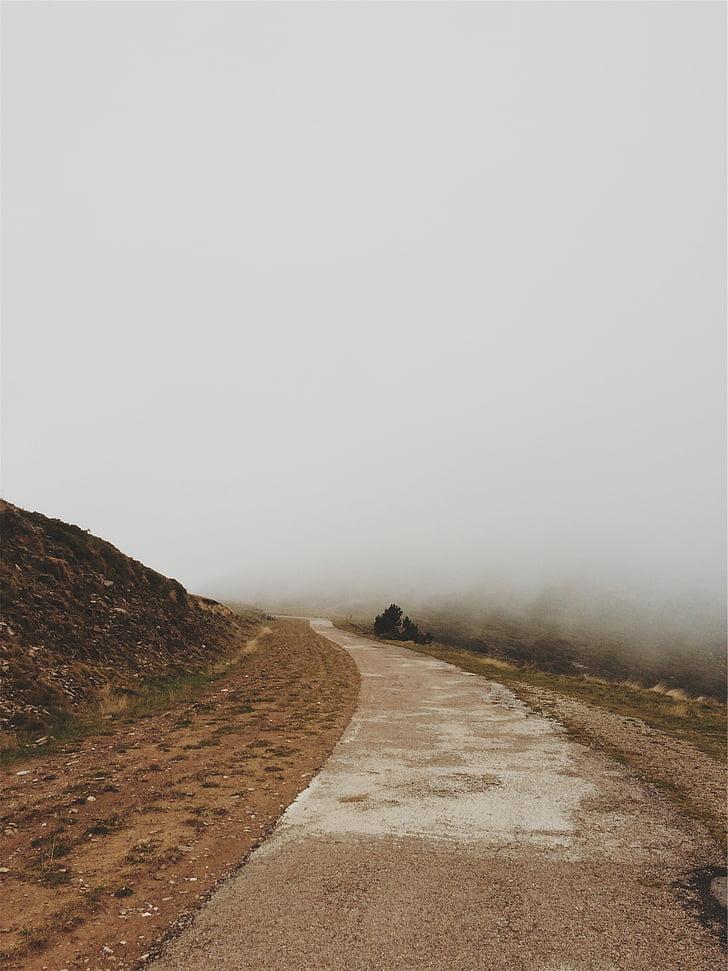 brązowy, asfaltu, drogi, mglisty, czas, mgła, ścieżka